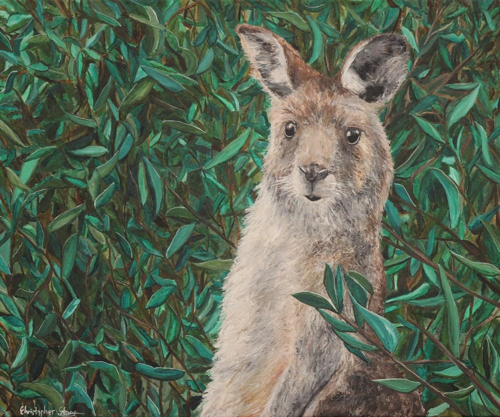 Wallaby standing still