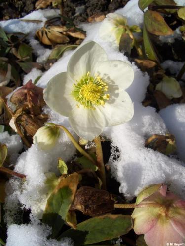 Kasten Schnee 3-06 (6)