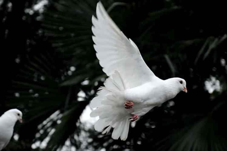 Prayers For Divine Intervention