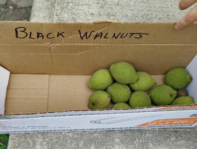 black-walnut.jpg?fit=661%2C500&ssl=1