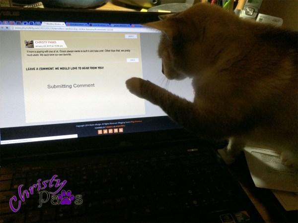 Blogging Kitty Morning Routine