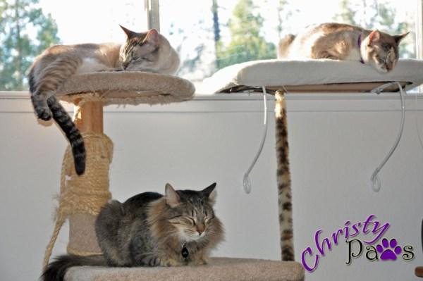 WW We three cats