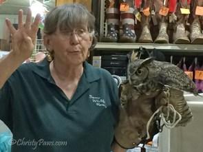 Radar, great horned owl
