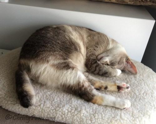 I've Been MIA - sleeping on my heated bed