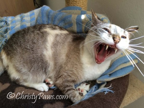 Wordless Wednesday: Yawns All Around Christy 4215 060