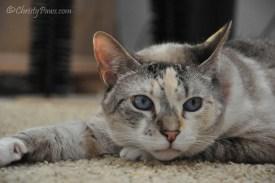 Contemplating - Adopt a Shelter Pet