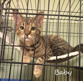 Adopt Baby -- Green-Eyed Beauty