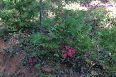 Cowcat UP! - Trail Ride Adventure of a Cat Scout - poison oak
