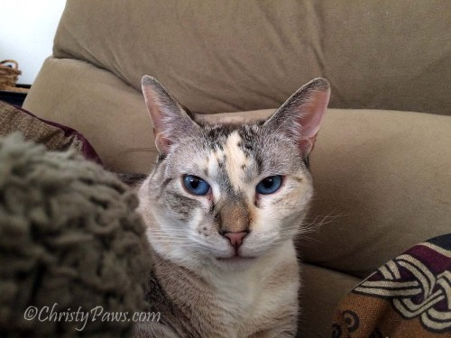 Almost Labor Day Sunday Selfies - Christy Paws