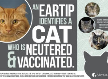 Eartip poster from Alley Cat Allies - feral cat day
