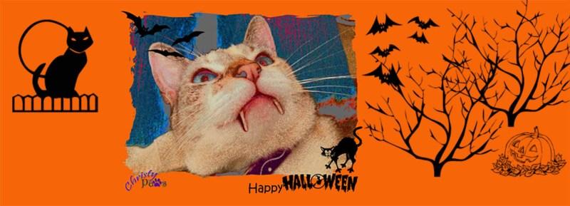 Halloween Banner - tricks for treats?
