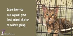 Learn how to support your local animal shelter or rescue group