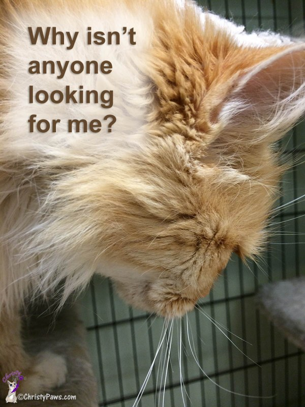 Things Will Get Better -- Available for Adoption in Jackson, CA -- Why isn't anyone looking for me?