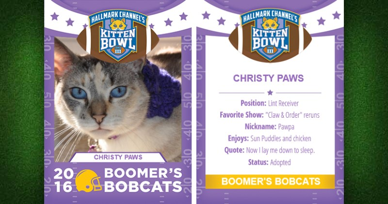 Kitten Bowl trading card