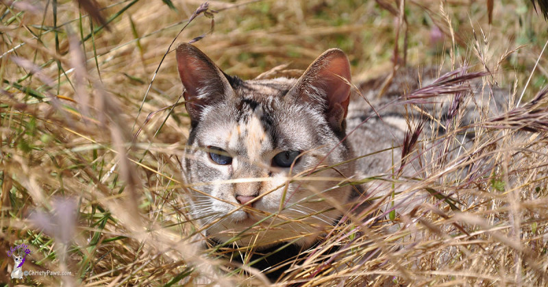 In the grass exploring