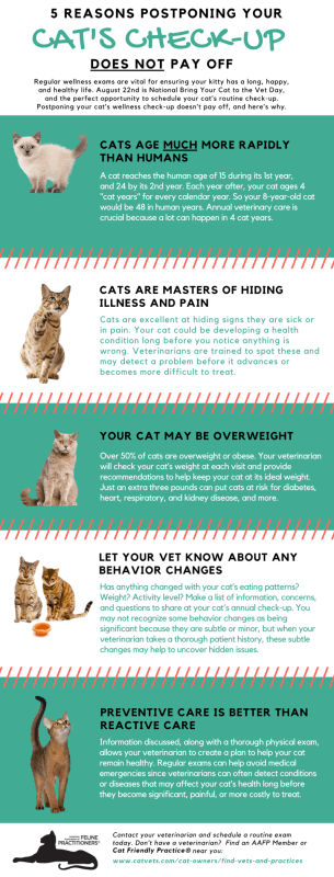 Bring Your Cat to the Vet Day Infographic