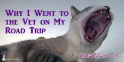 Continue reading to find out why I went to the vet on my big road trip to BlogPaws in Arizona and to learn more about stomatitis in cats.