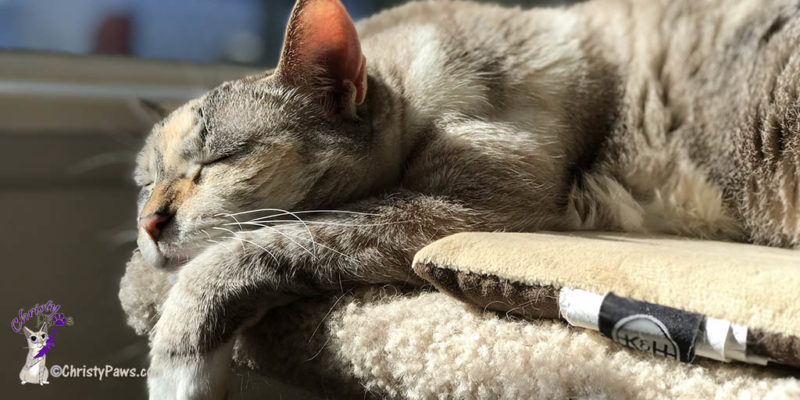 Why my cat diet didn't work - I must nap