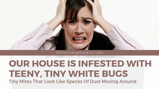 Woman with her hands in her hair, she looks frustrated. Title reads: Our house is infested with teeny, tiny white bugs. TIny mites that look like specks of dust moving around.