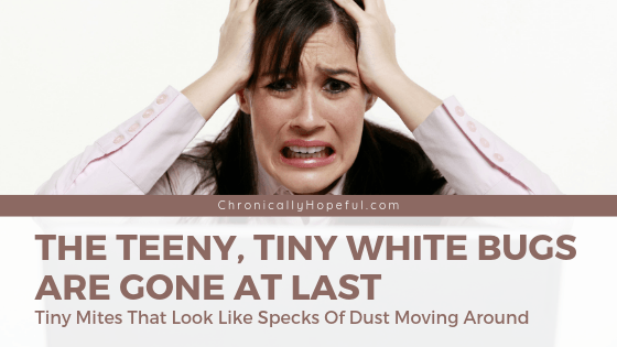 Woman with her hands in her hair, she looks frustrated. Title reads: the teeny, tiny white bugs are gone at last. TIny mites that look like specks of dust moving around.