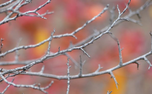 The beauty of plum branches offer a sense of calm before the holidays