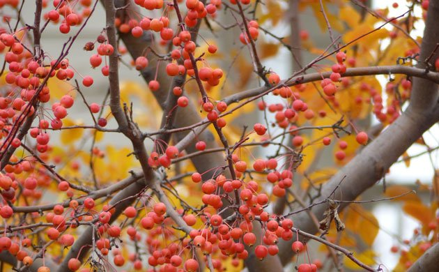 small-orange-berries-and-yellow-leaves