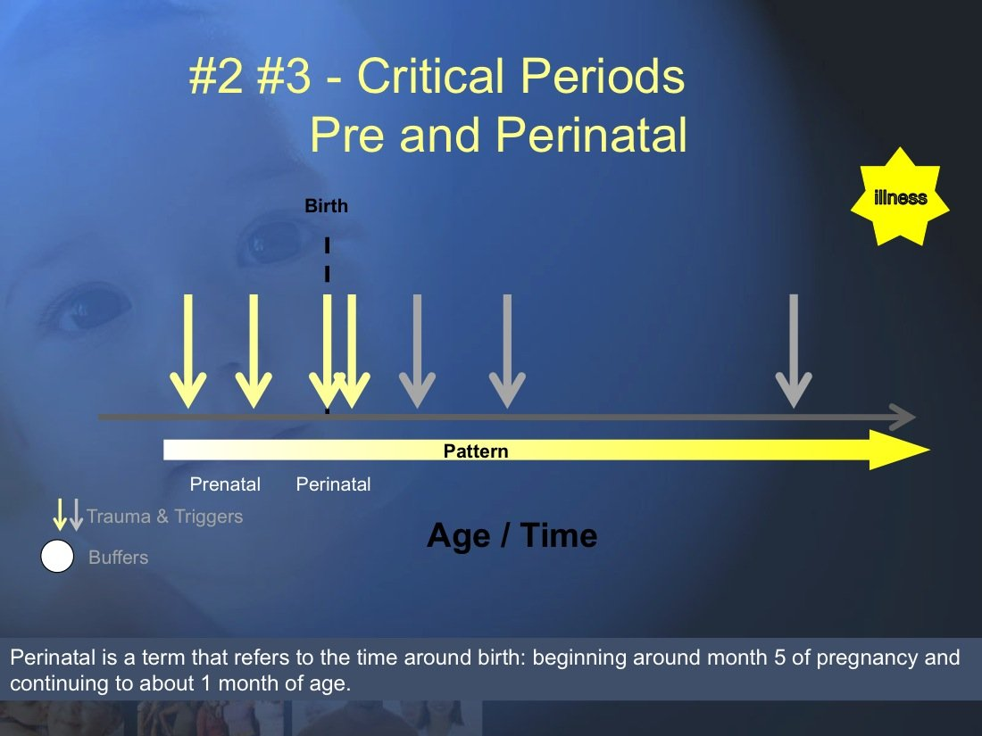 The Trauma and Chronic Illness Model (7 & 8) (Developmental Trauma # 2 Trauma during the Prenatal (7) and Perinatal (8) time frames are probably critical periods for the initiation of risk for Chronic Illness