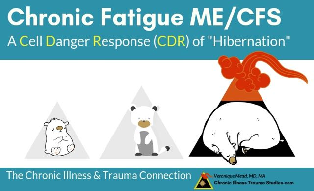 Dr Naviaux research lab found that me/cfs represents a metabolic state of hibernation or freeze that happens when the cell danger response gets caught / the CDR gets stuck. This new paradigm explains how risk for disease accumulates over time from ACEs ABEs #me/cfs #fms #mcs #pots #trauma #PTSD Mead CITS
