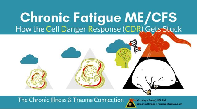 MECFS How the Cell Danger Response Gets Stuck in Freeze to Cause ME/CFS chronic fatigue syndrome #CFS #CDR Mead_CITS