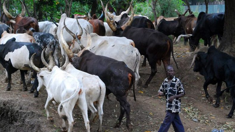 Emmanuel Jime says he will not appeal the anti-grazing law in Benue