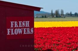 Fresh Flowers, 2009