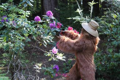 Daniel Oster as Bigfoot Pruning Flowers