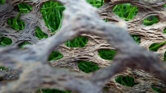 Dead Cholla Cactus