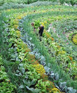 La Permaculture est très productive, mais nécessite beaucoup de main d'oeuvre.