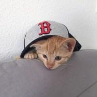 Bien préparer l'adoption d'un chaton !