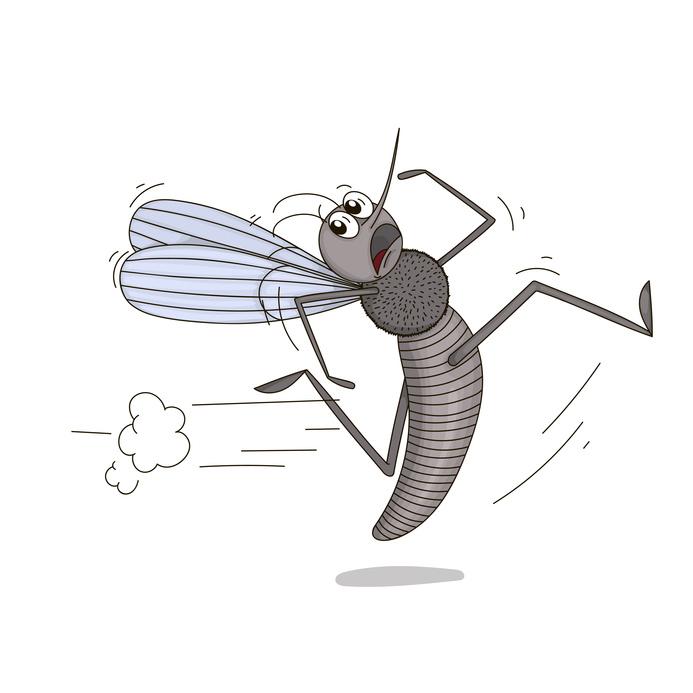 Piqures d'insectes et prévention : conseils de saison #2.2