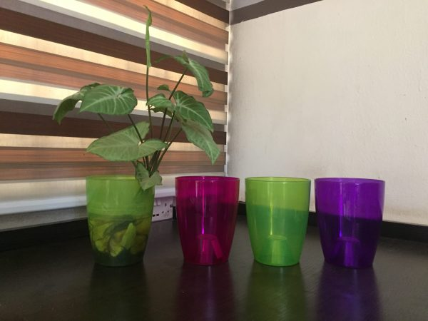 clear orchid pots