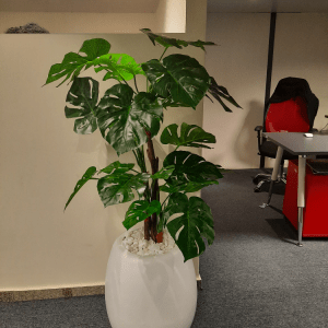 Mid Monstera Plant and Egg Pot