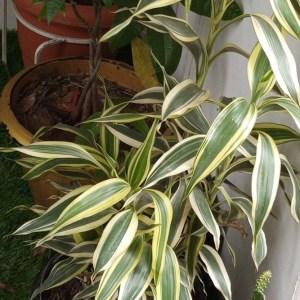 buy indoor plant in lagos