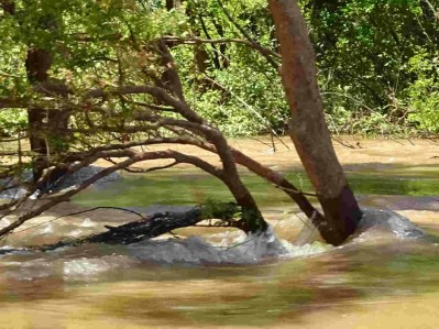 verdronken bomen 1