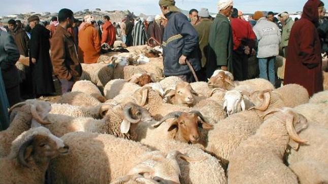 برلمانيون يطالبون التوفيق بالكشف عن مصير عيد الأضحى في ظل جائحة كورونا!