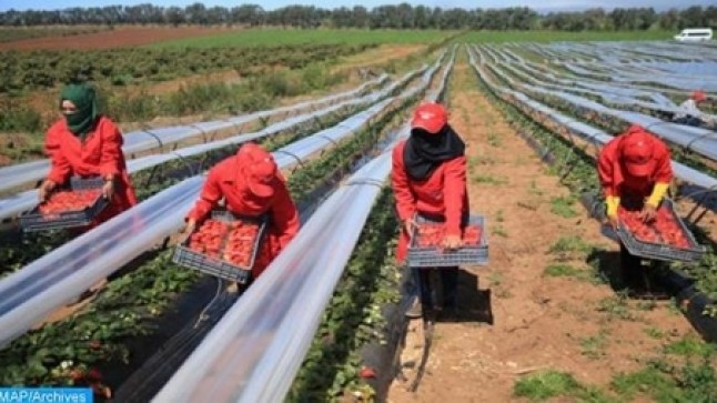 الأمم المتحدة ترسم صورة قاتمة عن وضعية المغربيات المشتغلات في حقول الفرولة بإسبانبا