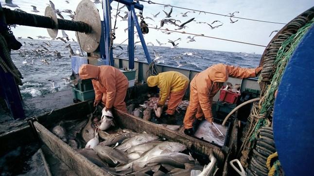 """منع صيد سمك """"سبادون"""" لمدة 5 سنوات في المياه البحرية المغربية"""