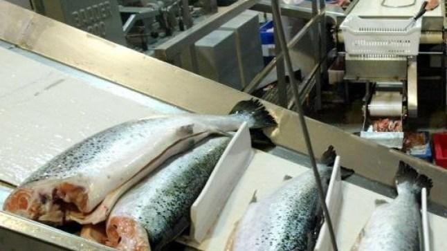 ارتفاع أسعار الزيوت يصيب قطاع تصبير السمك بالمغرب بأزمة خانقة