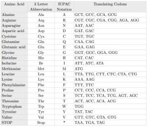 "Amino acids, their representative symbols, and the translating ""codons"" (three consecutive base pairs) that form them."
