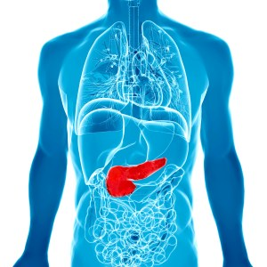 3d illustration with highlighted pancreas.