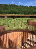 The vineyards of the Antinori family winery. Florence, Italy