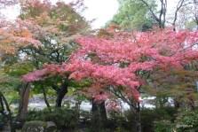 雨の後で 東行庵の秋
