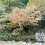 秋を探しに 神上寺