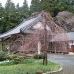桜 桜山南原寺